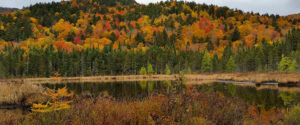 New Hampshire forest during fall foliage